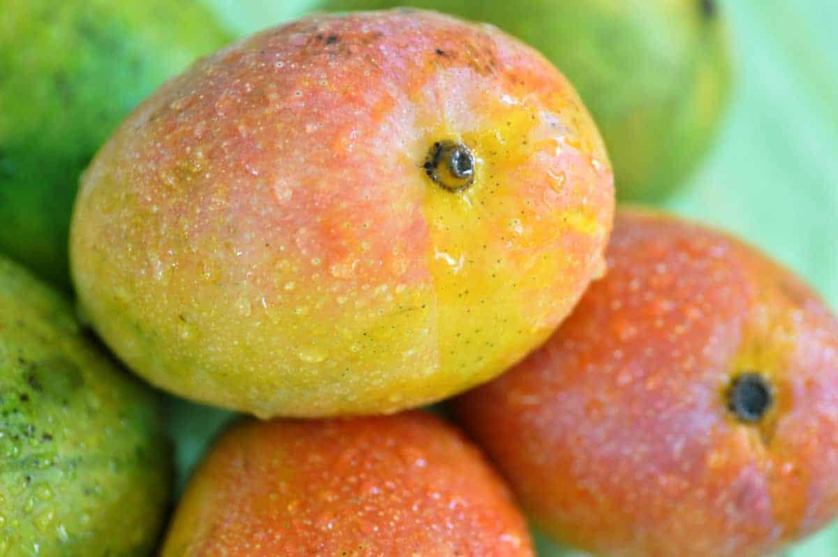 Mango – India's Gift to the World